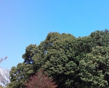 BL160103forest.jpg